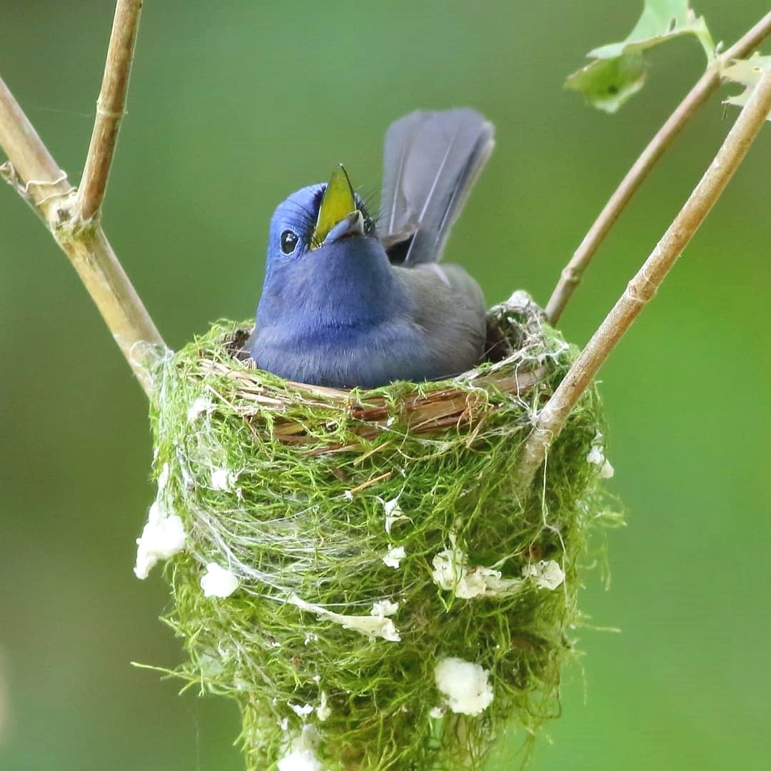The contribution of birds to biodiversity is immense.