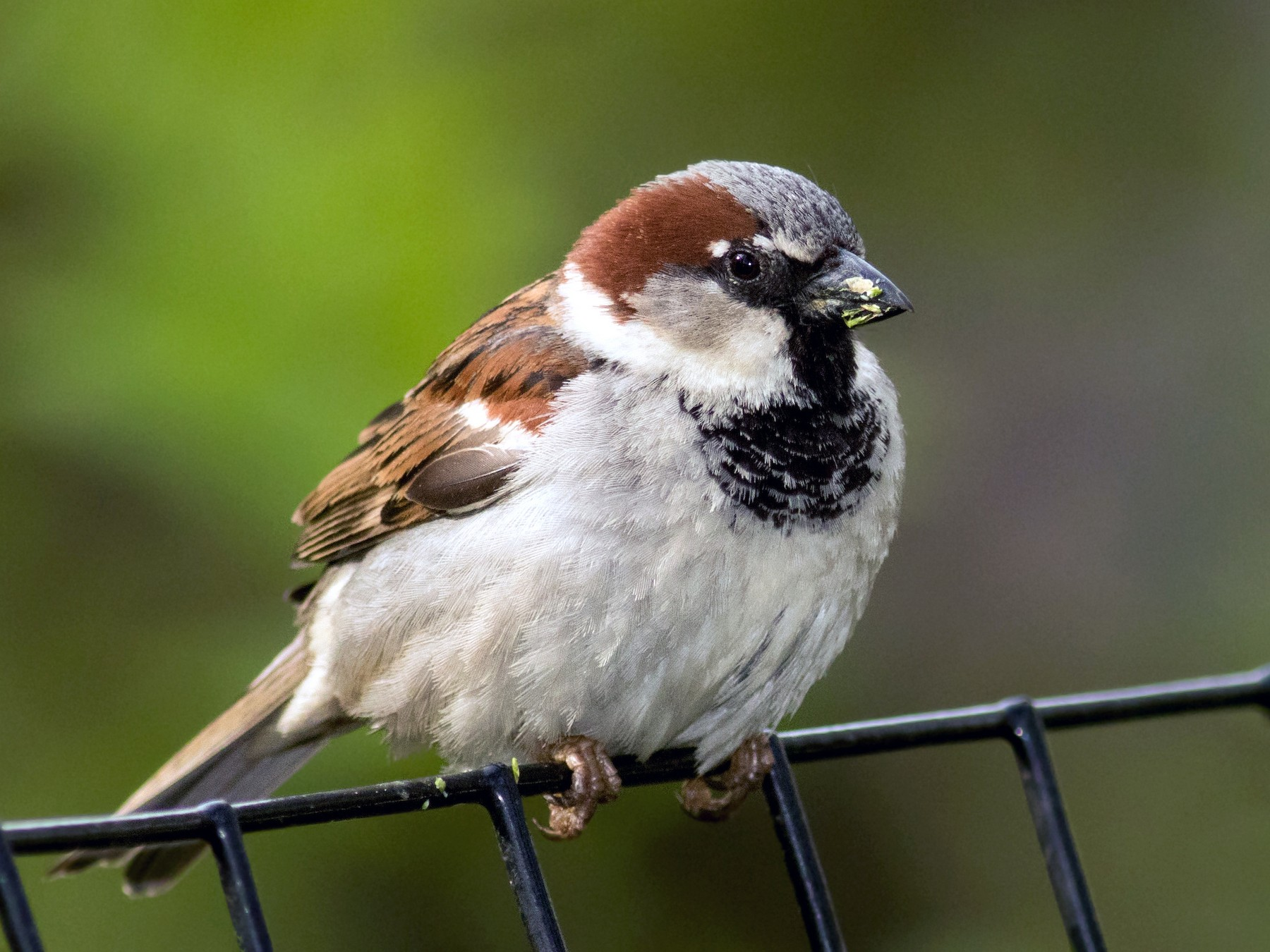 """""""The world Sparrow Day.""""- No selfie with the sparrow, Only candied memory."""