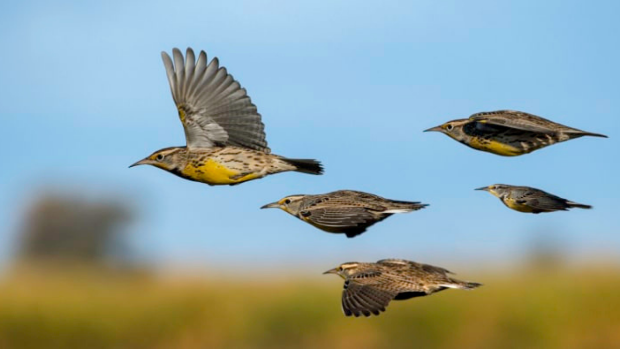 Birds are the indicators of environmental changes.